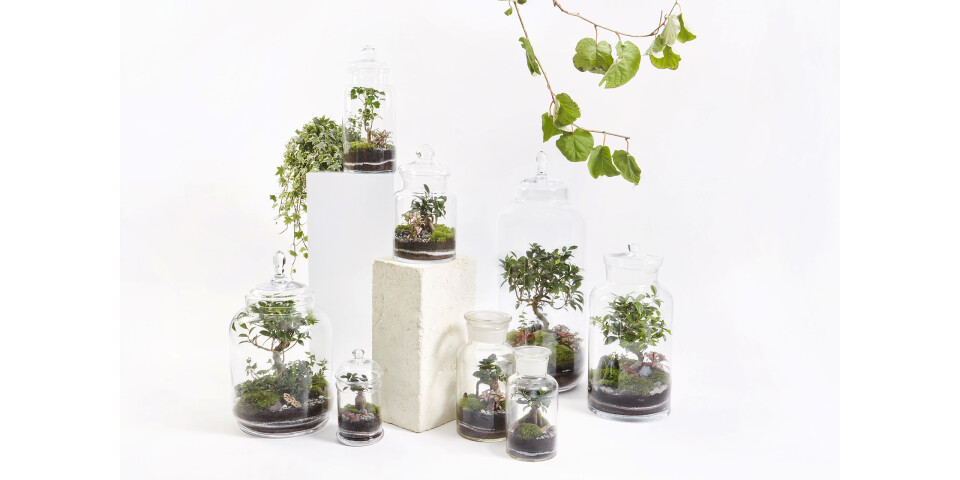 GREEN FACTORY – PICTURE TERRARIUM 3